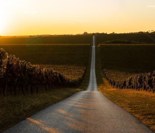 Vista affascinante di un vigneto che si trasforma in campi dorati durante l'alba