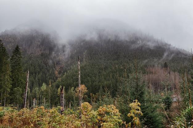 Vista autunnale, alberi verdi gialli e montagne innevate