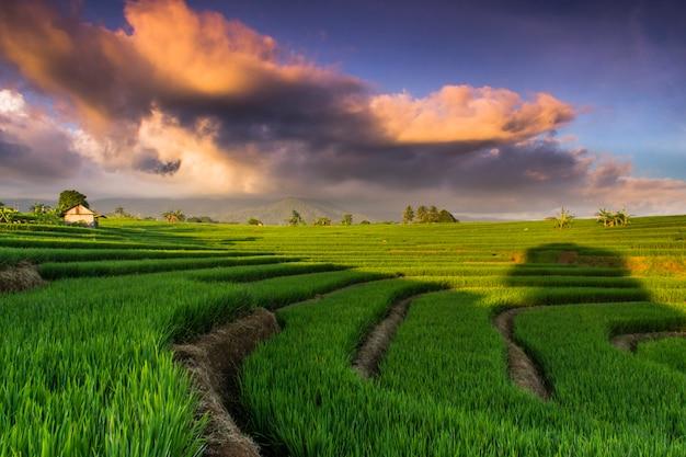 Vista campo di riso con nuvole come funghi sopra
