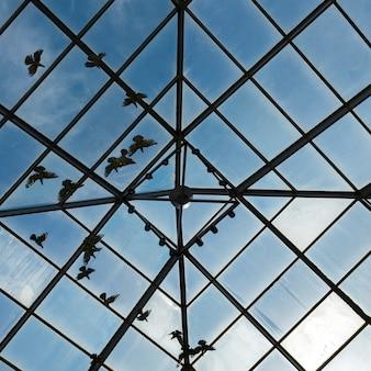 Vista dal basso degli uccelli visti attraverso il soffitto di vetro, southern methodist university, dallas, texas,