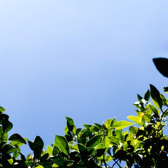 Vista dal basso dei rami degli alberi