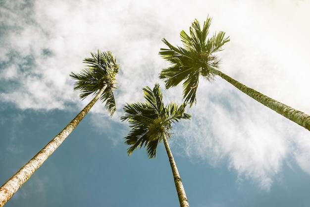 Vista dal basso delle palme. stile vintage.