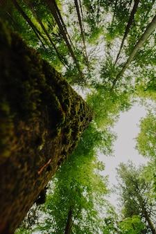 Vista dal basso di un gruppo di alberi