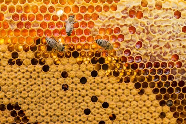 Vista dall'alto a nido d'ape