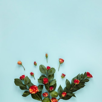 Vista dall'alto assortimento di rose e foglie da giardino