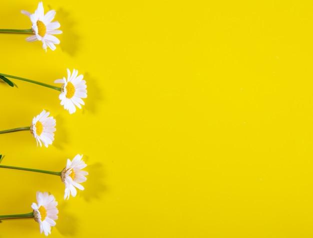 Vista dall'alto copia spazio camomilla su uno sfondo giallo