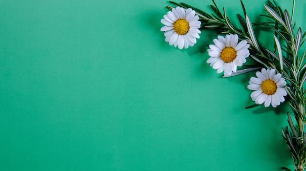 Vista dall'alto copia spazio rami di rosmarino con camomille su sfondo verde chiaro
