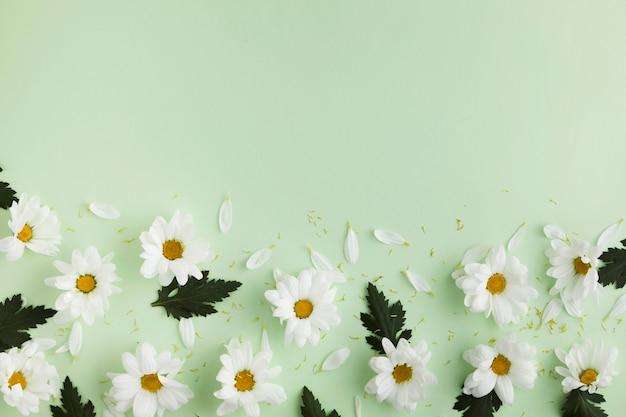Vista dall'alto del bellissimo concetto floreale