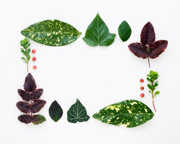 Vista dall'alto del concetto di foglie con spazio di copia