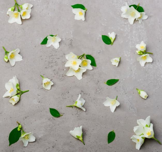 Vista dall'alto del modello di fiori di gelsomino, piatto laici