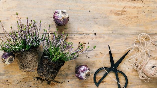 Vista dall'alto del vaso di fiori; forbice; corda e cipolle su fondo in legno