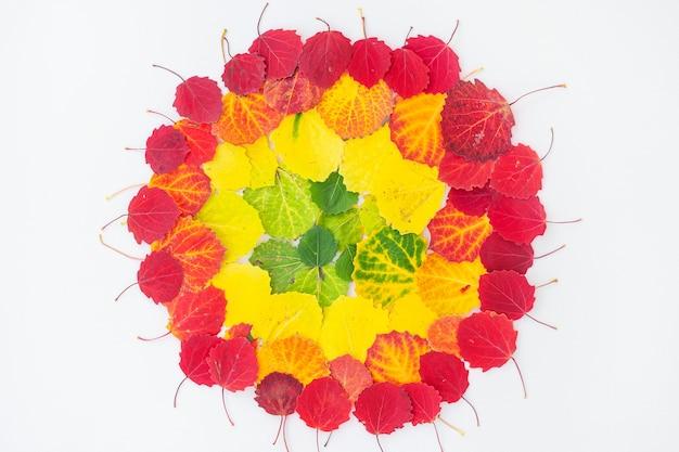 Vista dall'alto della disposizione delle foglie in base al colore