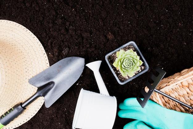 Vista dall'alto della pianta e attrezzi da giardinaggio