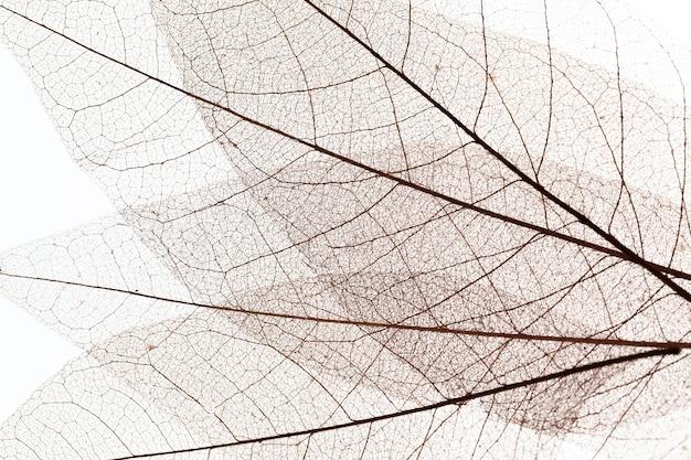 Vista dall'alto della trama delle foglie trasparenti
