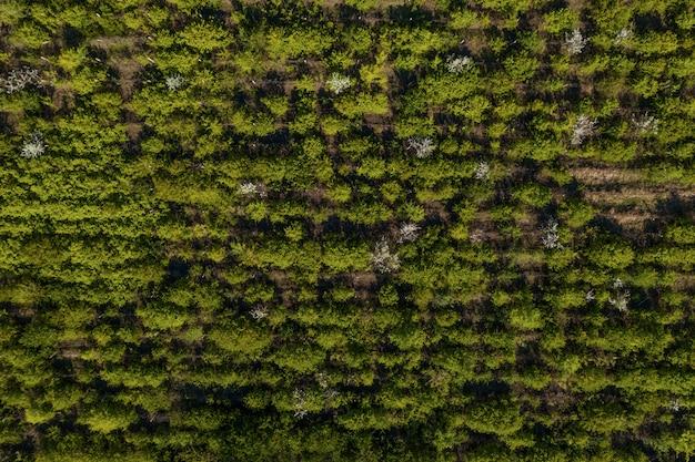 Vista dall'alto della trama di alberi