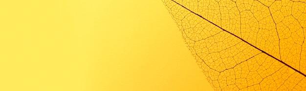 Vista dall'alto della trama fogliare trasparente con tonalità colorate e spazio di copia