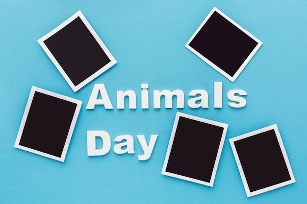 Vista dall'alto delle foto per la giornata degli animali