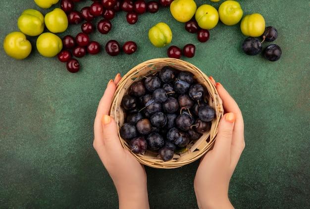 Vista dall'alto delle mani femminili che tengono un secchio delle piccole prugnole di frutta blu-nera acide con ciliegie rosse con prugne ciliegia verdi su sfondo verde