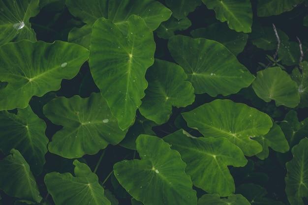 Vista dall'alto delle piante verdi