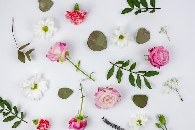 Vista dall'alto di bellissimi fiori su sfondo bianco