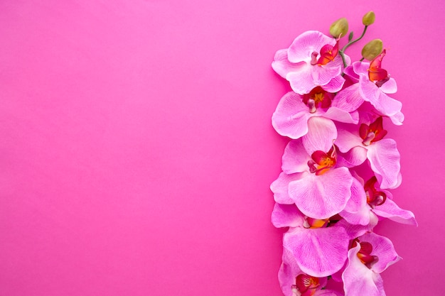 Vista dall'alto di fiori di orchidea su sfondo rosa brillante