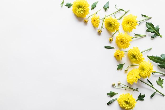 Vista dall'alto di fiori e foglie