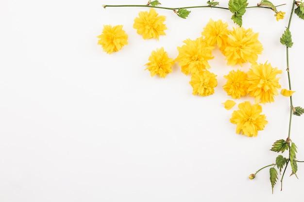 Vista dall'alto di fiori freschi