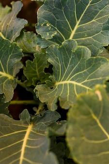 Vista dall'alto di foglie di lattuga