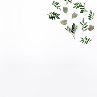Vista dall'alto di foglie verdi