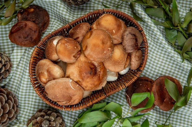 Vista dall'alto di funghi freschi in un cesto di vimini e coni con foglie verdi su tessuto plaid