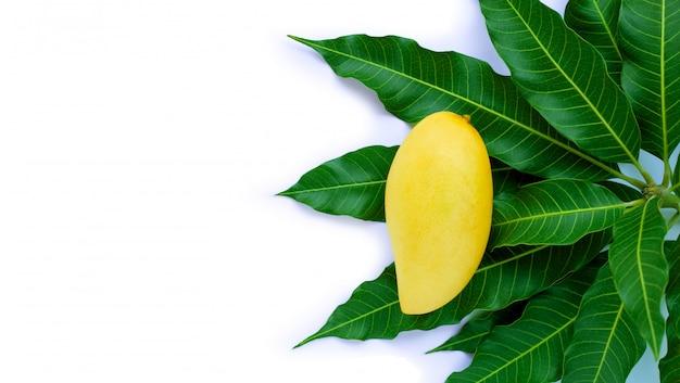 Vista dall'alto di mango giallo con foglie, frutta tropicale succosa e dolce.