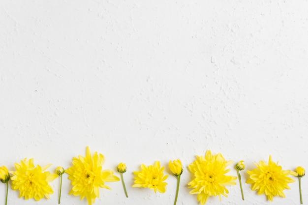 Vista dall'alto di margherite colorate primavera con spazio di copia