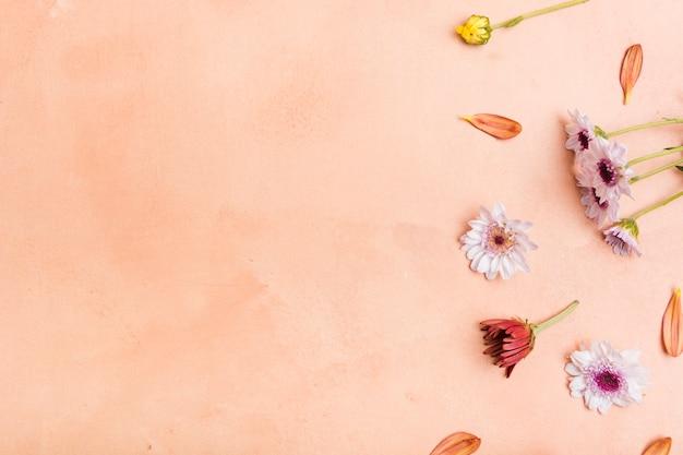 Vista dall'alto di margherite multicolori primavera con spazio di copia