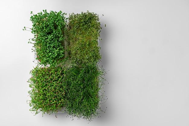 Vista dall'alto di micro vassoi verdi su sfondo bianco