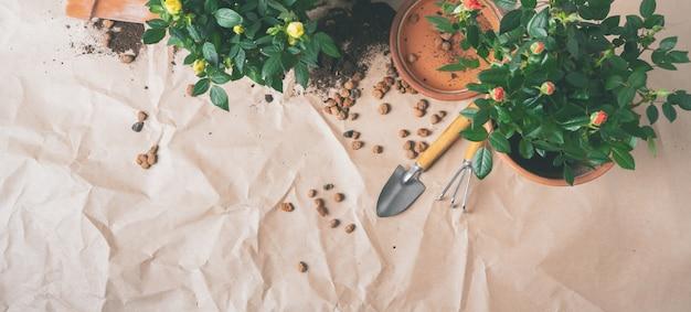 Vista dall'alto di mini roses in vasi da fiori in ceramica e attrezzi da giardinaggio con spazio libero per il testo. banner lungo raggio