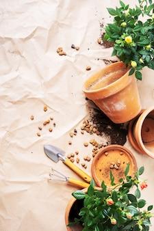 Vista dall'alto di mini roses in vasi da fiori in ceramica e attrezzi da giardinaggio con spazio libero per il testo. preparando per la primavera.