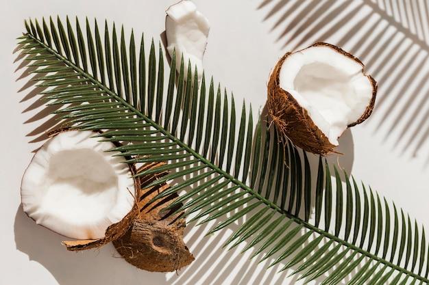 Vista dall'alto di noci di cocco con piante