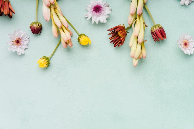 Vista dall'alto di orchidee e margherite di primavera con spazio di copia