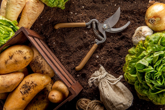 Vista dall'alto di patate con insalata e forbici