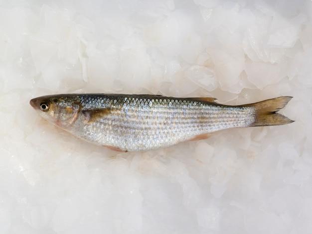 Vista dall'alto di pesce fresco sul tavolo in cubetti di ghiaccio