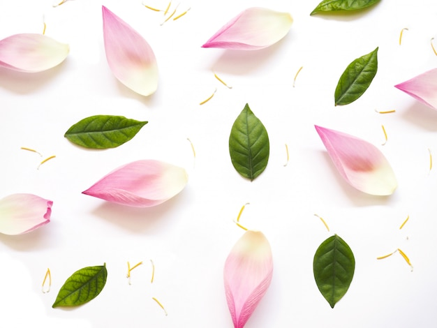 Vista dall'alto di petali di loto con foglie verdi e polline giallo su bianco