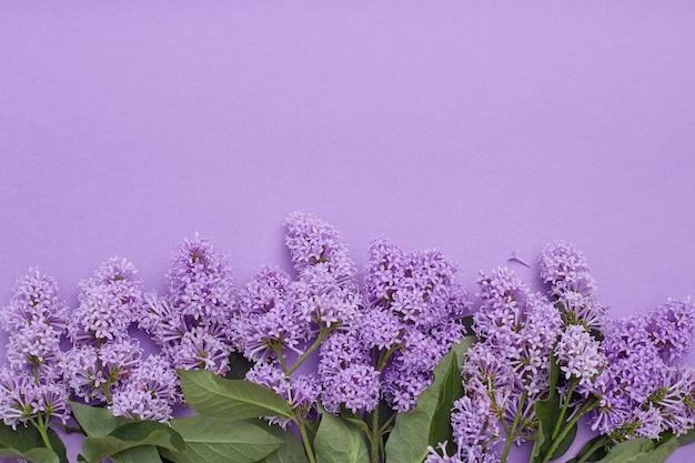 Vista dall'alto di posa di fiori lilla sdraiato sul tavolo, la primavera è arrivata, copia spazio sfondo viola. fiore lilla, cosmetici primaverili per viso e mani