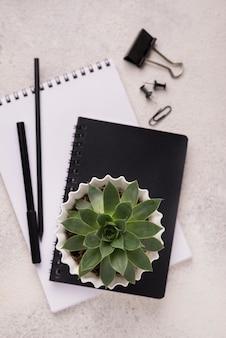 Vista dall'alto di quaderni con pianta succulenta