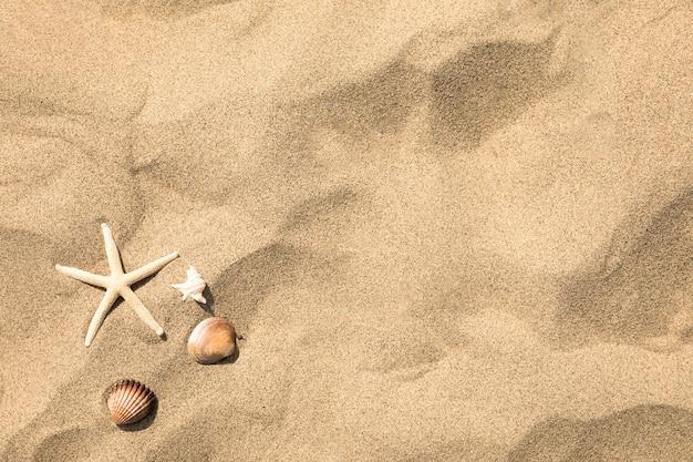 Vista dall'alto di stelle marine e conchiglie sulla spiaggia di sabbia tropicale