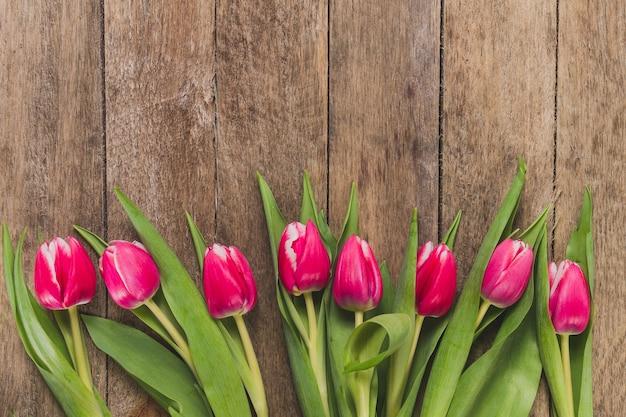 Vista dall'alto di tulipani in fila