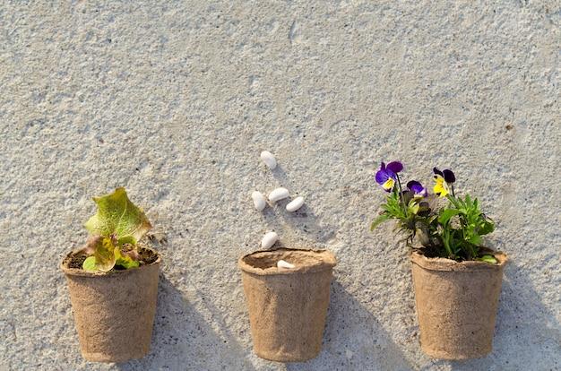 Vista dall'alto di vasi di torba con piantine, semi, fiori viola, verdure, erbe