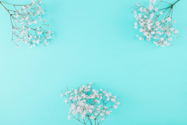 Vista dall'alto fiori bianchi