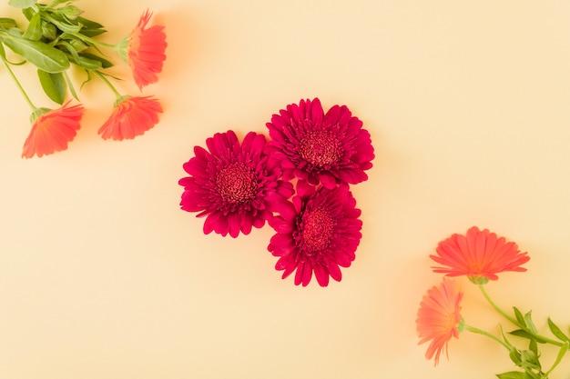 Vista dall'alto fiori colorati