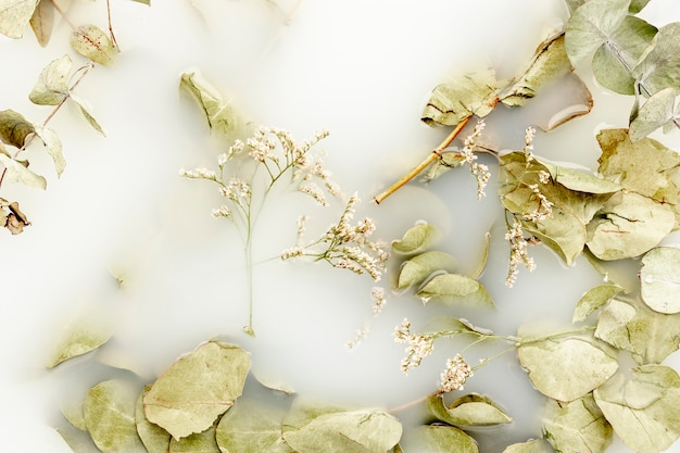 Vista dall'alto foglie pallide in acqua bianca