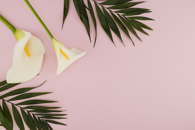Vista dall'alto iris e foglie tropicali